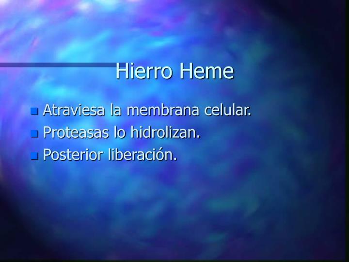 Hierro Heme
