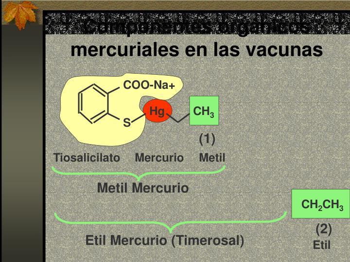 Componentes orgánicos mercuriales en las vacunas