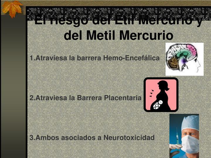 El riesgo del Etil Mercurio y del Metil Mercurio