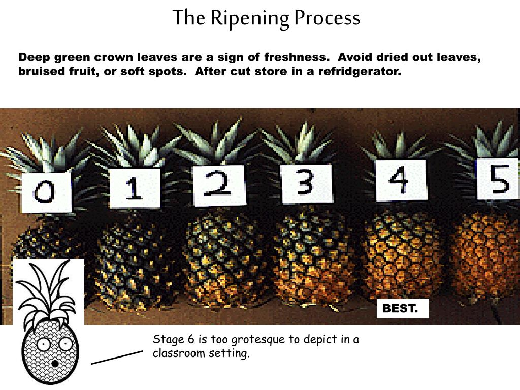 The Ripening Process