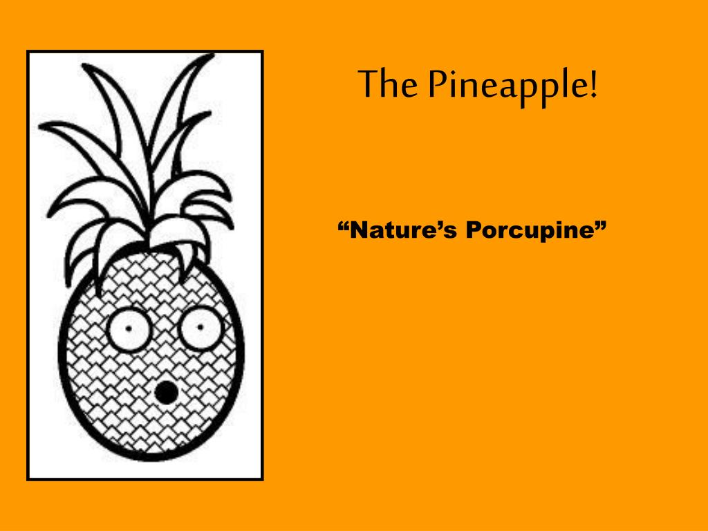 The Pineapple!