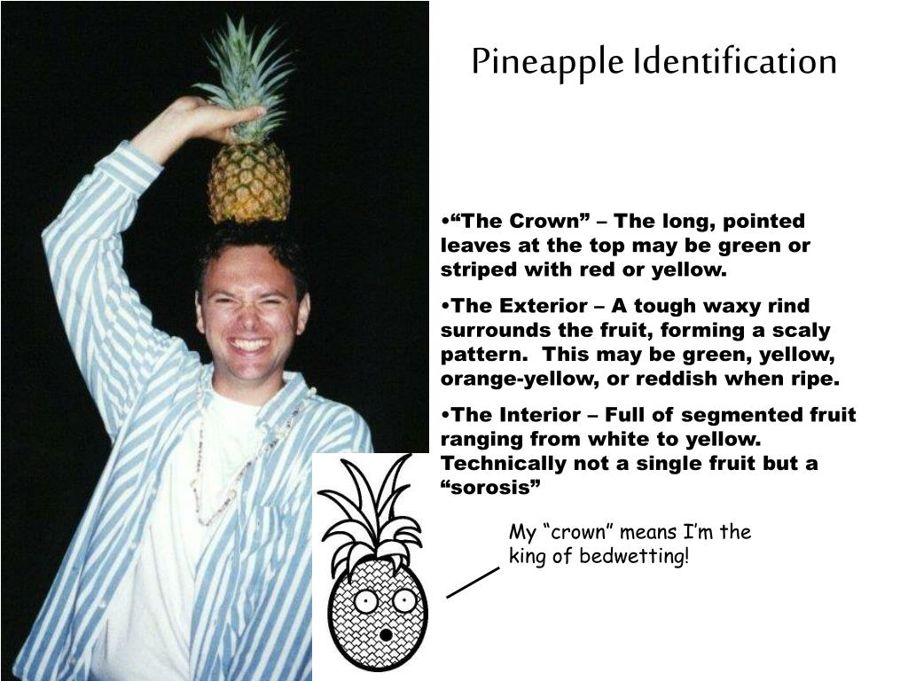 Pineapple Identification