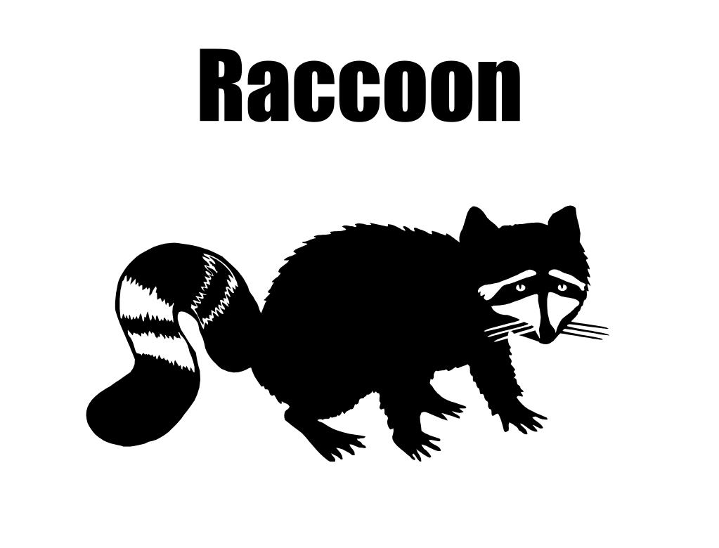 Raccoon
