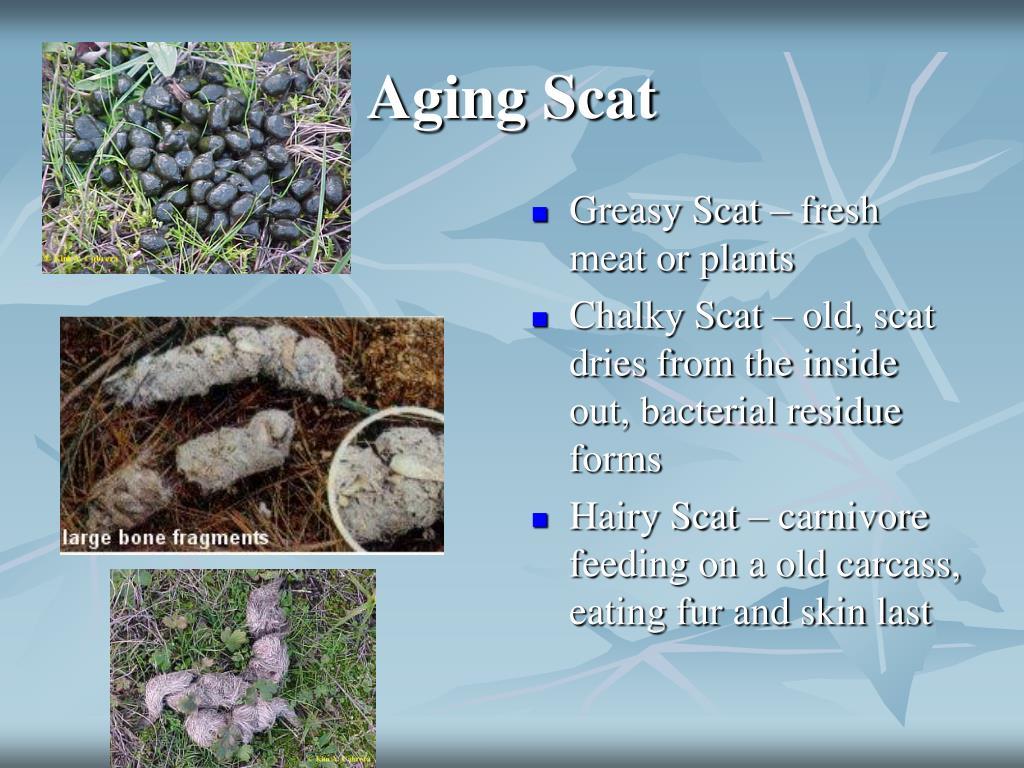 Aging Scat