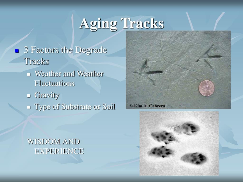 Aging Tracks