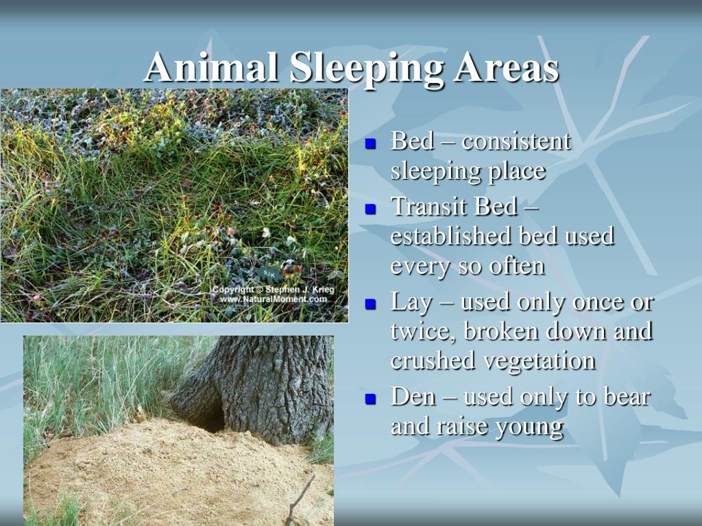 Animal Sleeping Areas