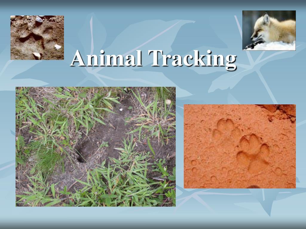 Animal Tracking
