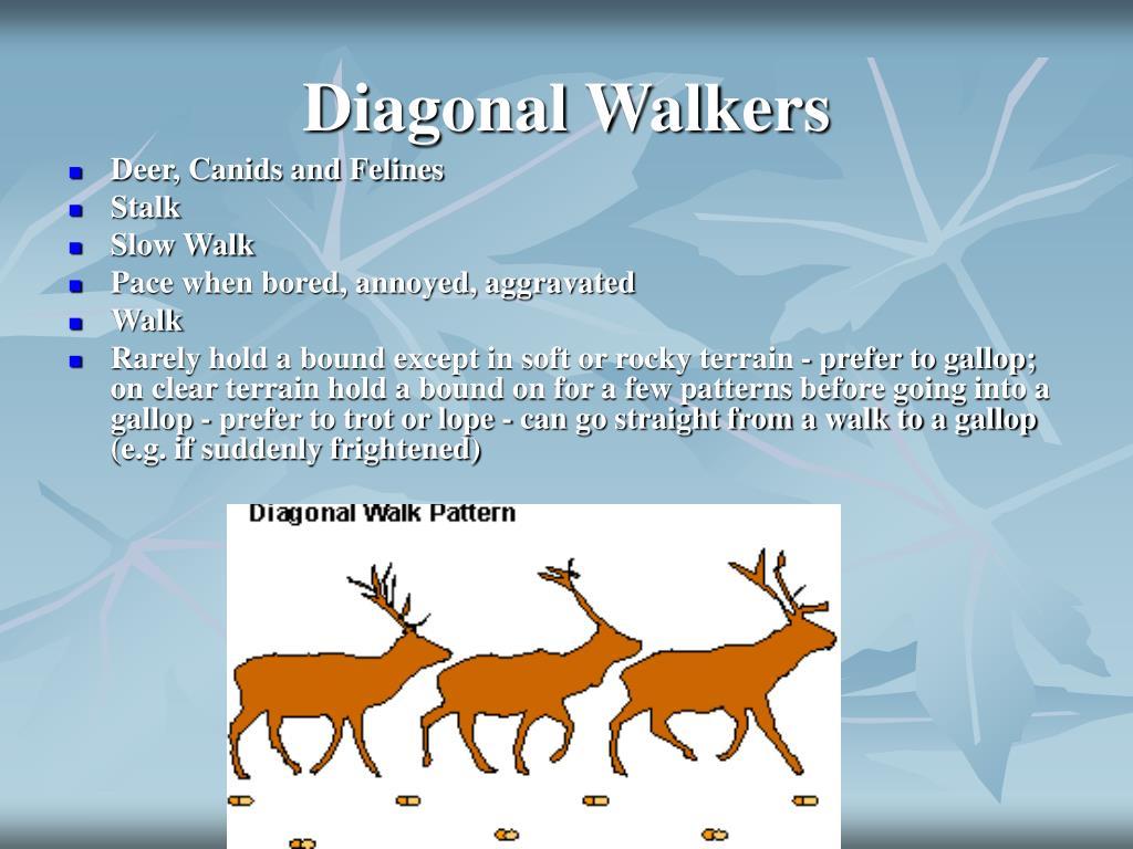 Diagonal Walkers