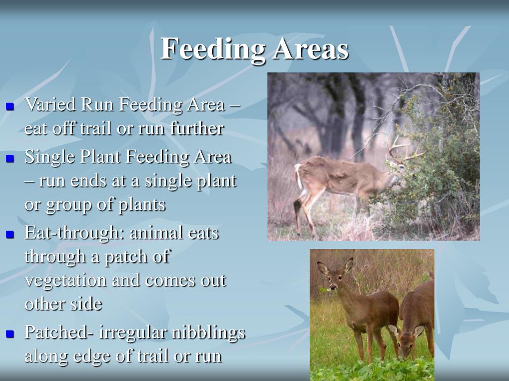 Feeding Areas