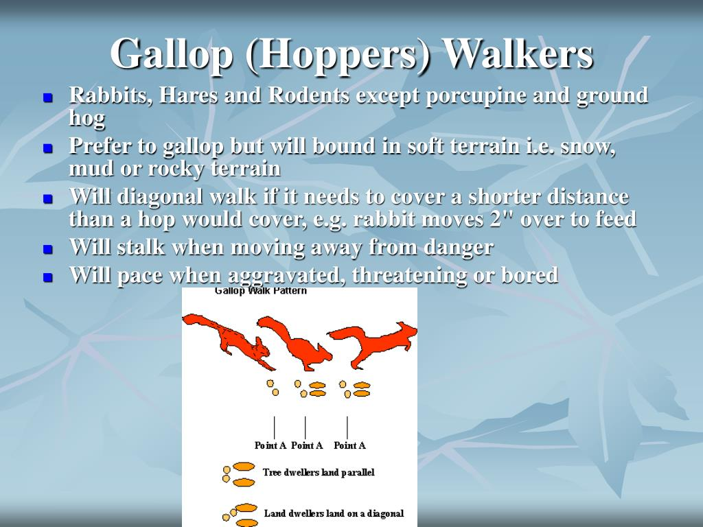 Gallop (Hoppers) Walkers