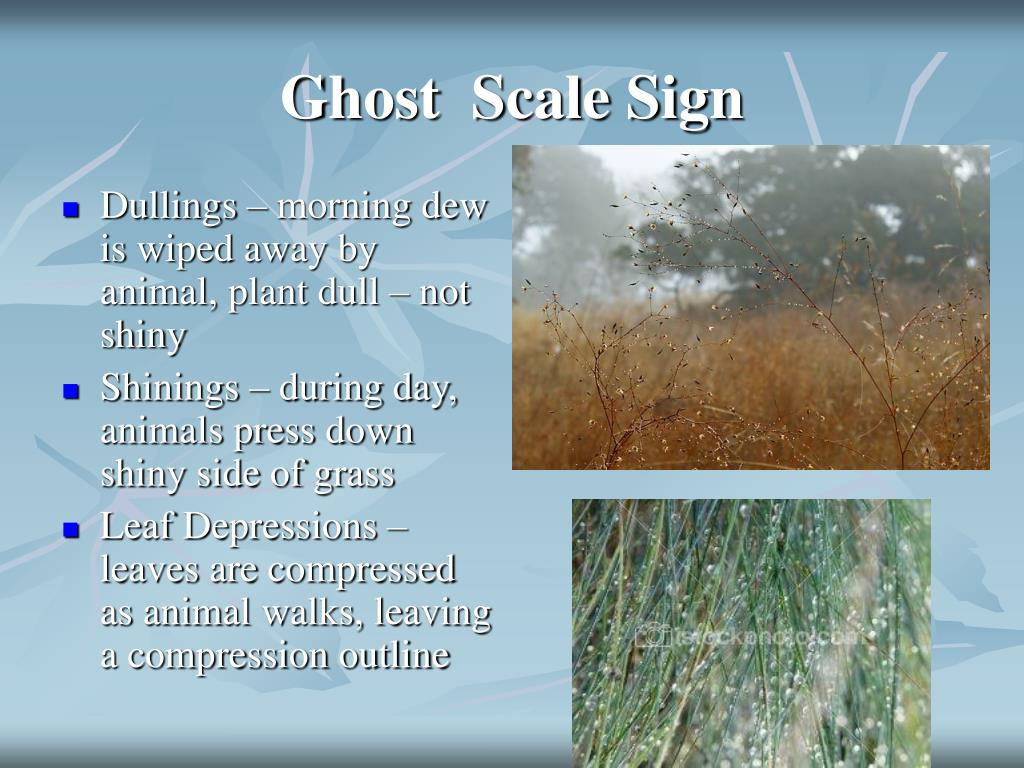 Ghost  Scale Sign