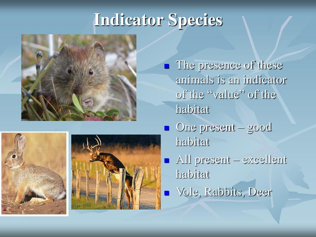 Indicator Species