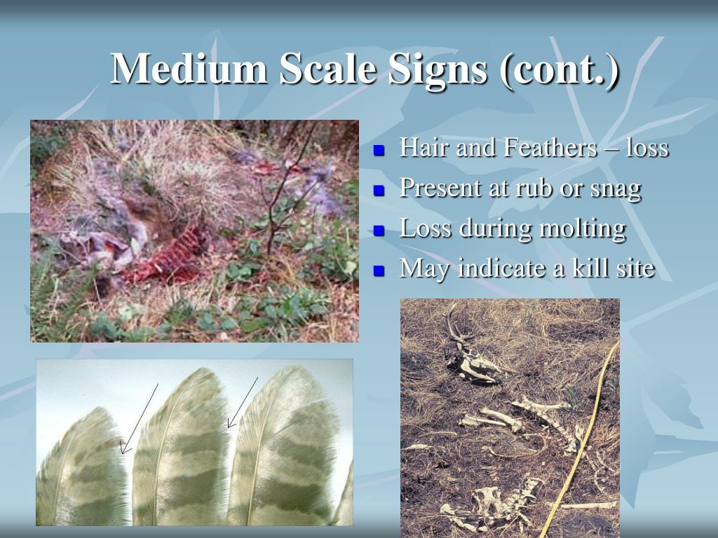 Medium Scale Signs (cont.)