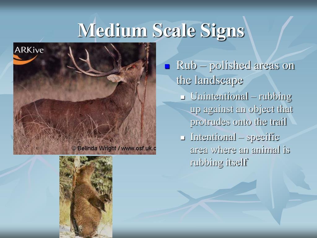 Medium Scale Signs