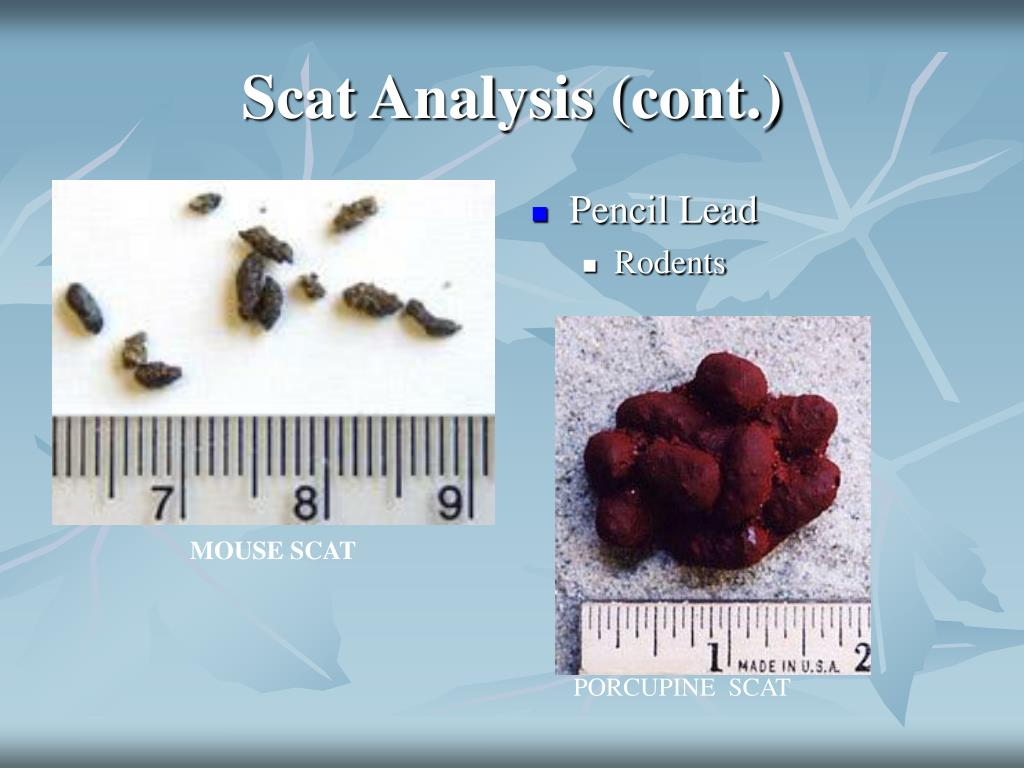 Scat Analysis (cont.)