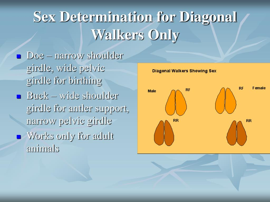Sex Determination for Diagonal Walkers Only