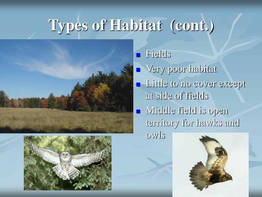 Types of Habitat  (cont.)