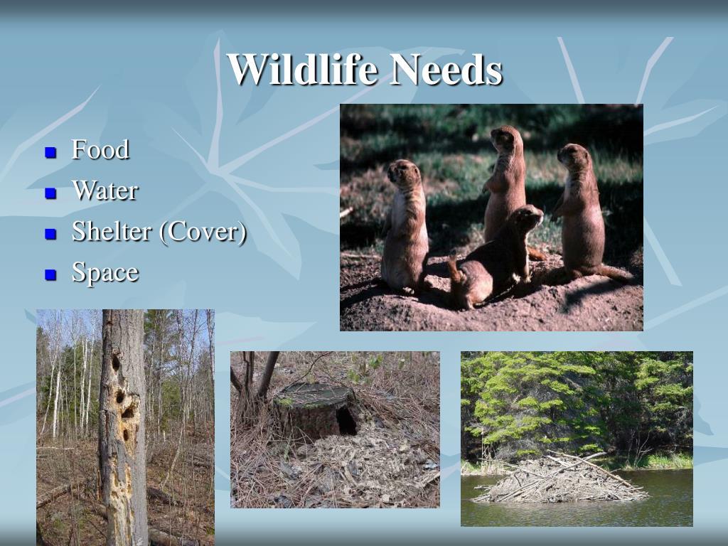 Wildlife Needs