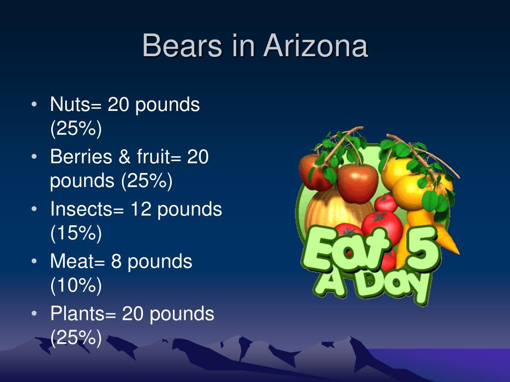 Bears in Arizona