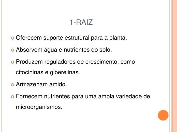 1-RAIZ