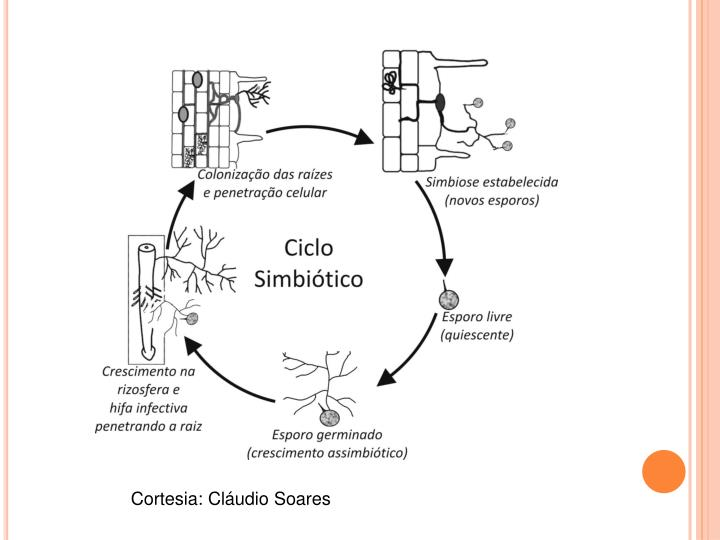 Ciclo simbiótico