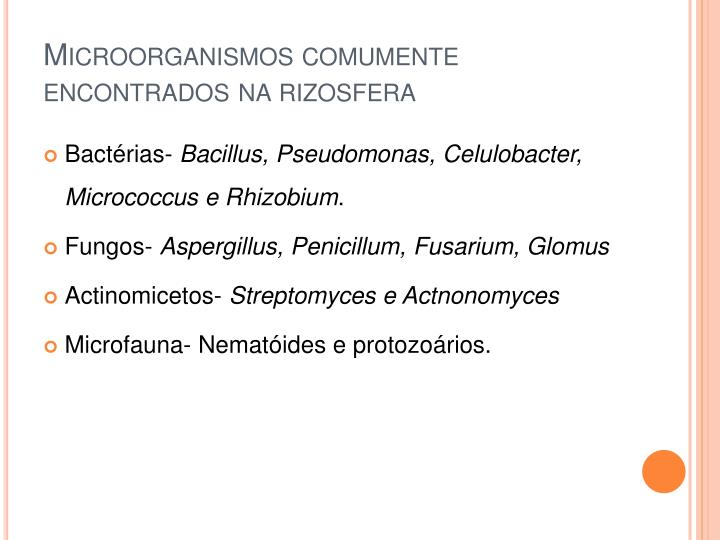 Microorganismos comumente encontrados na