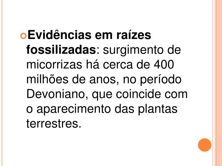 Evidências em raízes fossilizadas