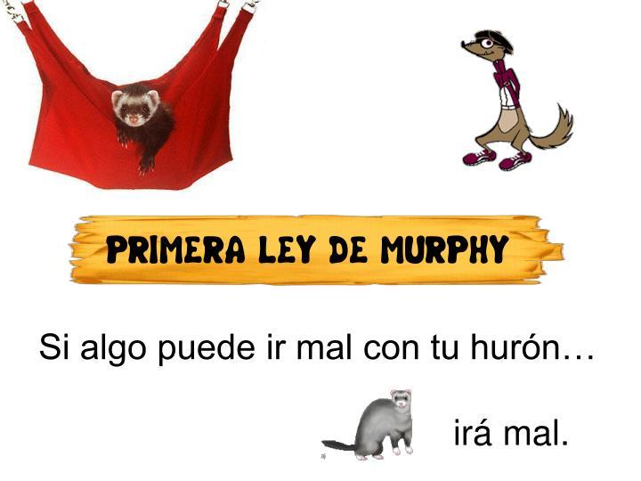 PRIMERA LEY DE MURPHY