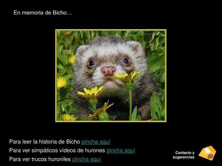En memoria de Bicho…
