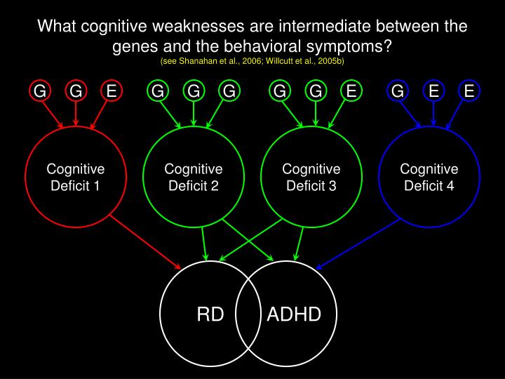 What cognitive weaknesses are intermediate between the genes and the behavioral symptoms?
