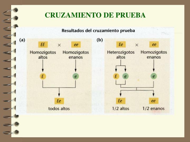 CRUZAMIENTO DE PRUEBA