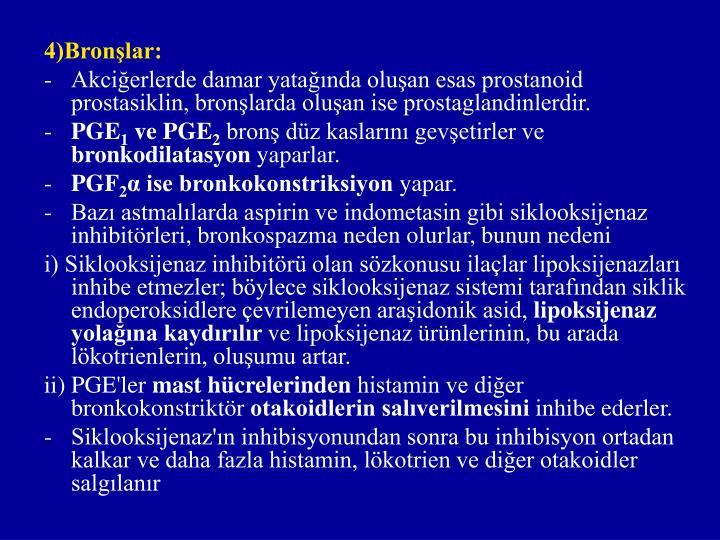4)Bronşlar: