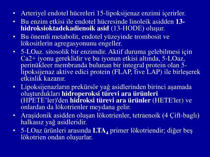 Arteriyel endotel hücreleri 15-lipoksijenaz