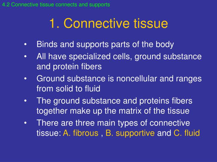 4.2 Connective tissue connects and supports