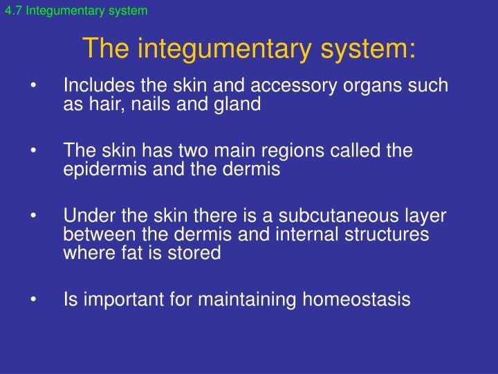 4.7 Integumentary system