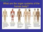what are the organ systems of the human body1