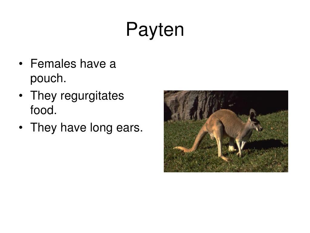 Payten