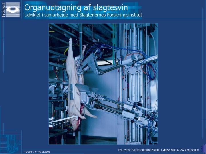 Organudtagning af slagtesvin