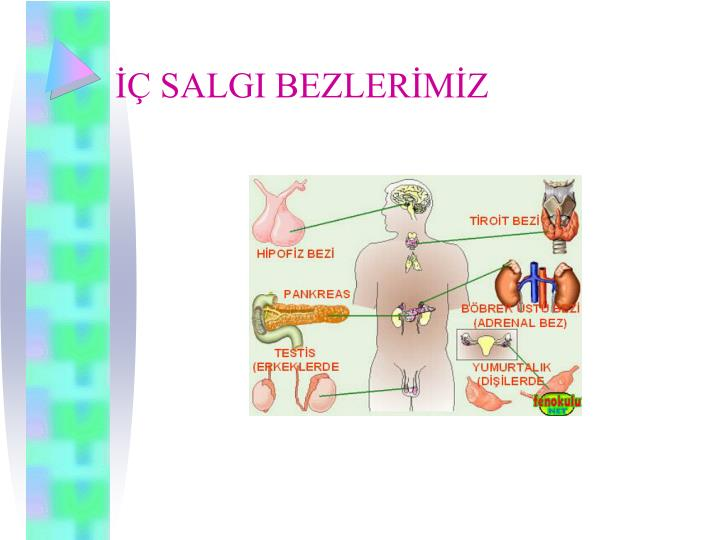 SALGI BEZLERMZ