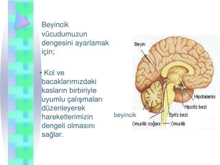 Beyincik vcudumuzun dengesini ayarlamak iin;