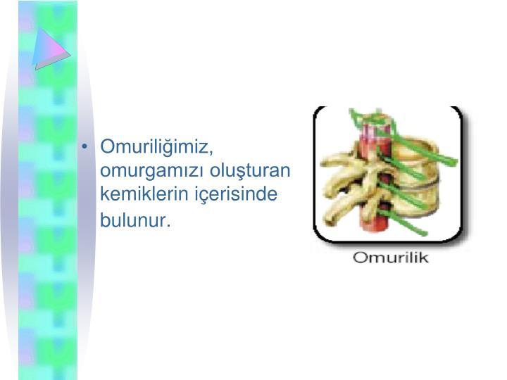 Omuriliimiz, omurgamz oluturan kemiklerin ierisinde bulunur.
