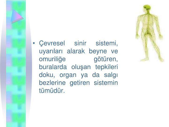 evresel sinir sistemi, uyarlar alarak beyne ve omurilie gtren, buralarda oluan tepkileri doku, organ ya da salg bezlerine getiren sistemin tmdr.