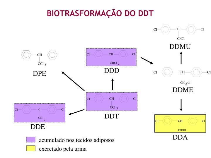 BIOTRASFORMAÇÃO DO DDT