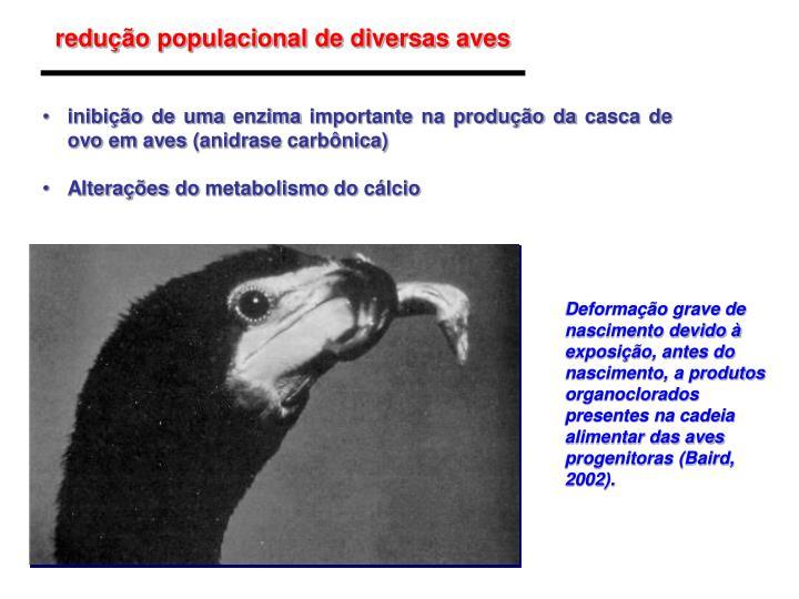 redução populacional de diversas aves