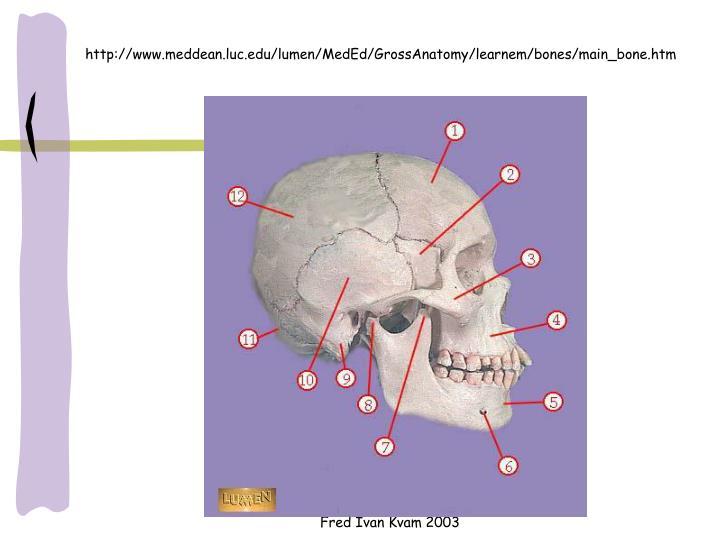 http://www.meddean.luc.edu/lumen/MedEd/GrossAnatomy/learnem/bones/main_bone.htm