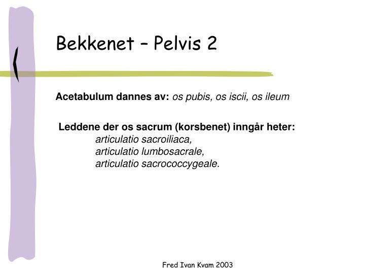 Bekkenet – Pelvis 2