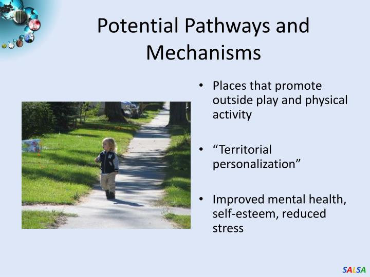 Potential Pathways and Mechanisms