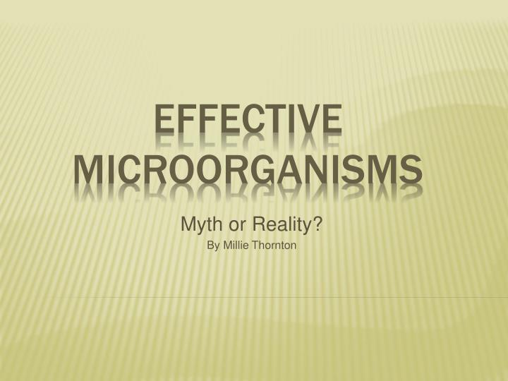 how to produce effective microorganisms