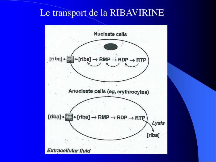 Le transport de la RIBAVIRINE