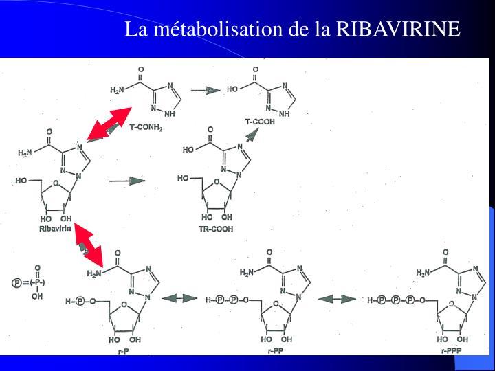 La métabolisation de la RIBAVIRINE